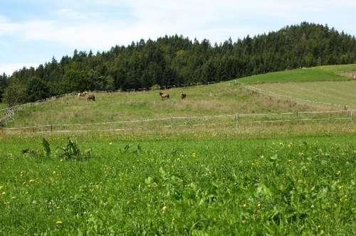 ALLEINLAGE: Alter Bauernhof mit 14 HA Grund, Ruhelage
