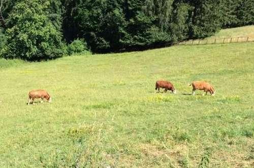 Naturpark Gurktal - Weitensfeld Bauernhof mit 14 ha Grund
