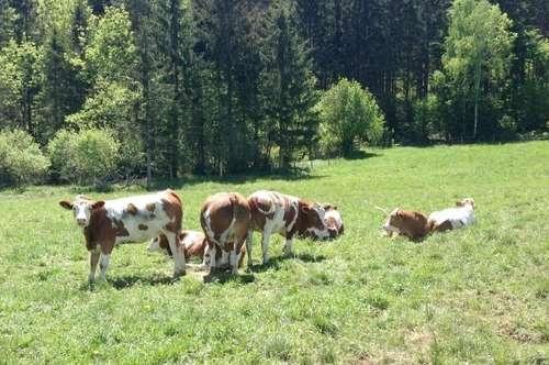 Wörthersee Nähe: Landwirtschaft mit 34 ha Grund in sonniger Ruhelage