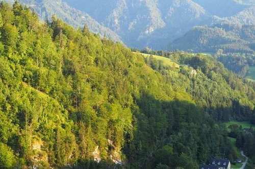 Wiesen und Wald in Opponitz zu kaufen!