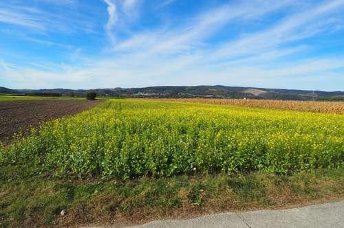 Zwei Flache Ackergrundstücke in Persenbeug-Gottsdorf zu kaufen!