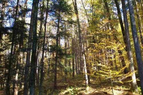 GRAZ Umgebung: Mischwald für Eigenbedarf oder für Anlage.