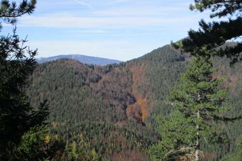 Wald am Neukogel