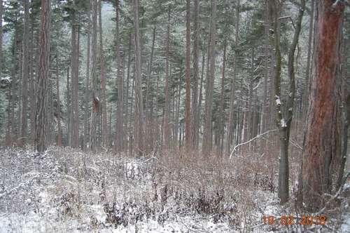 Wald mit 1,2ha zu verkaufen!! - PROVISIONSFREI