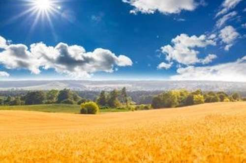 Land und Forstwirtschaft, Rassing Versteigerungsobjekt
