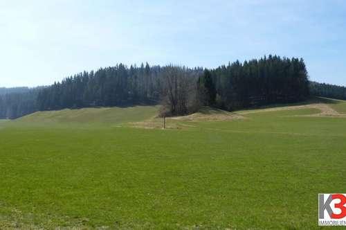 10 ha Wiese mit anteiligem Wald für Landwirtschaft oder Gartenbau