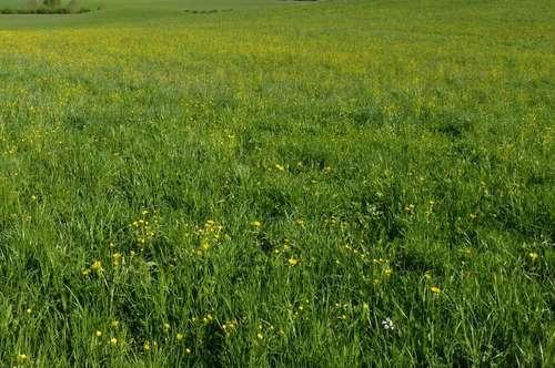 6 ha Wiese nördlich des Wallersees für landwirtschaftliche Nutzung
