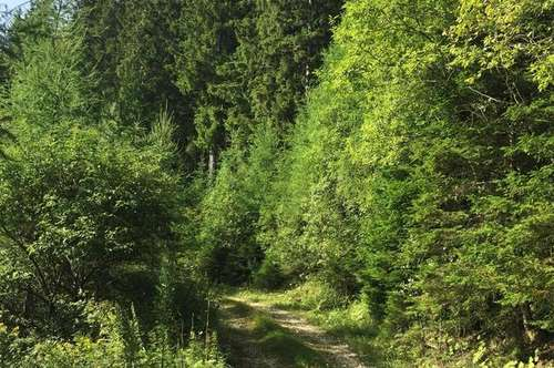 ++ 15,40 ha Wald mit kleiner Jagdhütte
