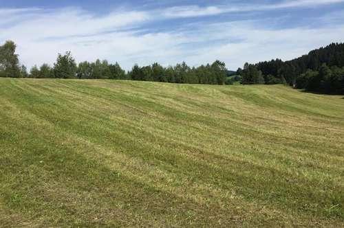 1,8 ha Wiesenfläche - Neumarkt