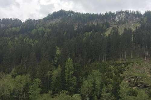 +++18 ha Wald im Murtal +++
