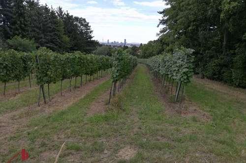 Gartengrundstück mit Holzhäuschen in Ruhelage mit großartigem Altbaumbestand und Blick auf Wien!