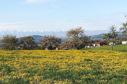 Der Blick von ihrer Terrasse – 10 Autominuten von Linz
