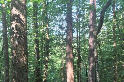 Ferlach Glainach 4,6 ha Wald zu kaufen!