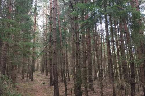 Wald 2,7 ha  Nähe Bleiburg