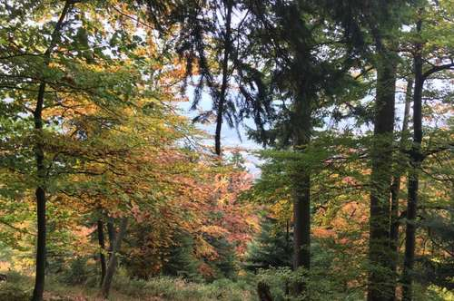 Wald 4,6 ha  Nähe Globasnitz
