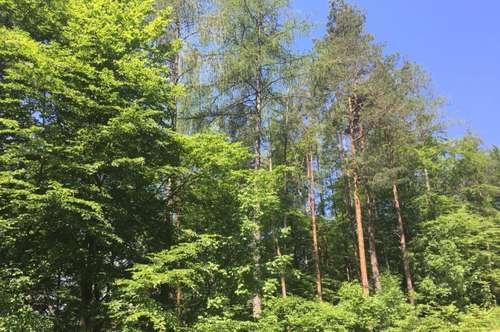 Rosental Glainach, Wald 4,6 ha zu kaufen!
