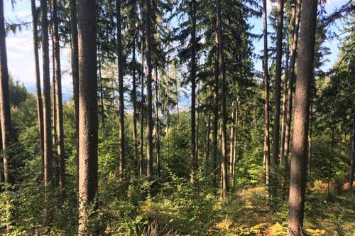 Klagenfurt Viktring,  Wald 12,1 ha teilbar zu verkaufen.