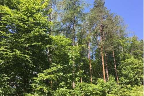 Ferlach 4,6 ha Wald zu kaufen!