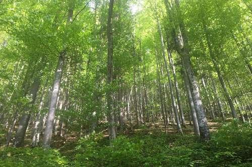 Forstliegenschaft in der Grünau