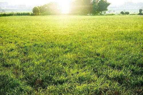 unbebautes Grundstück in Biedermannsdorf - RARITÄT