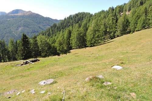 Almweide-Weiderechte-Waldbestand