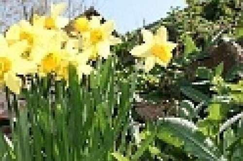 Frühlingsaktion: 1 Monat mietfrei!! PROVISIONSFREI!