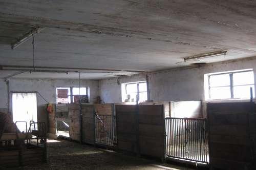 Schöner Pferdehof mit Wohnhaus zu verkaufen!