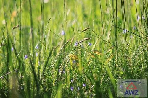 Gelegenheit - Naturwiese