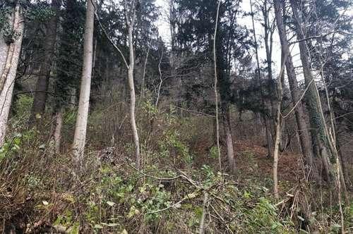 5,8 ha Wald nördlich von Graz
