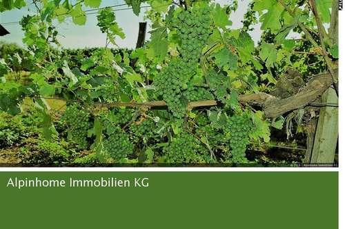 Renommiertes Gutsweingut in Niederösterreich- exclusiv!