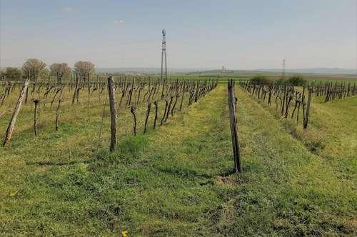 Weinkeller und Weingarten zu Kaufen in Straning-Grafenberg