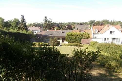 Mistelbach: Stadthaus mit riesigem Grund