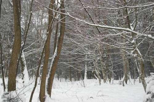 Wald in Güttenbach