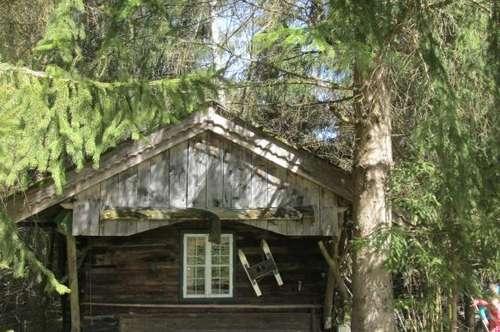 Großes Waldgrundstück mit einer Jagdhütte