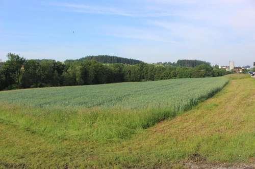 landwirtschaftlicher Nutzgrund / Wald im Gemeindegebiet Peterskirchen