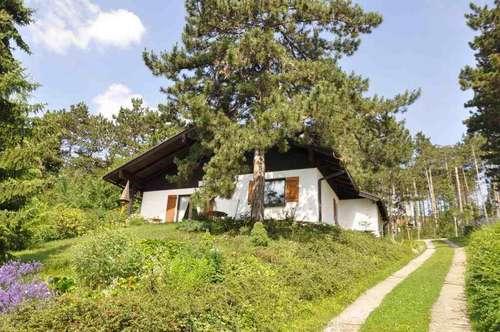 Nettes Einfamilienhaus in Waldrandlage mit Ausblick über Bad Fischau-Brunn
