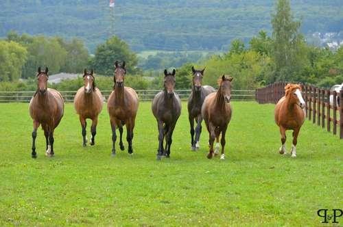 Landwirtschaftliches Grundstück - Pferdehaltung erlaubt!