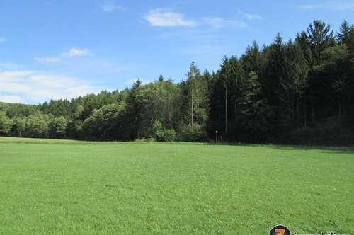 Thermenregion Stegersbach: Herrliches Baugrundstück in Waldrandlage