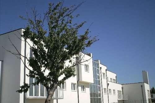 schöne Gartenwohnung mit Terrassen