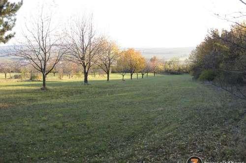 Nähe Eisenstadt: Riesiges Grundstück/Wald