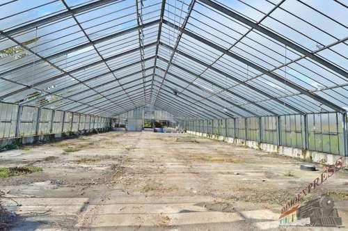 Glashaus mit Grünfläche zu verpachten