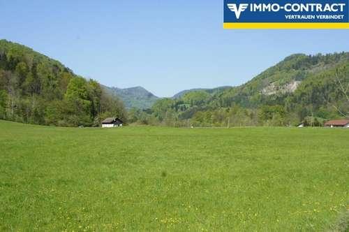 Landwirtschaftliche Grundflächen (ca 4ha Acker und 2ha Wiese)