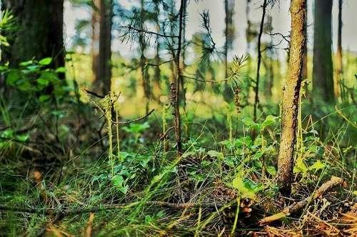 WALD ca. 4 ha Waldparzelle zu verkaufen!! Einmalige Chance nahe Wörthersee
