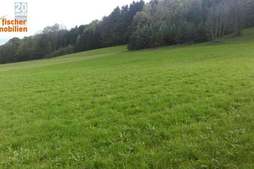 Bauparzelle angrenzend an Grünland