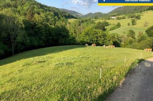 Landwirtschaftlicher Besitz - Weiden und Wälder
