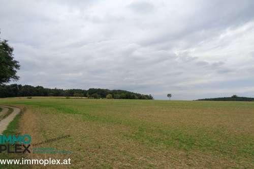 Ackerland - verschiedene Grundstücksgrößen im nördlichen Niederösterreich zu kaufen - in der Nähe Maissau