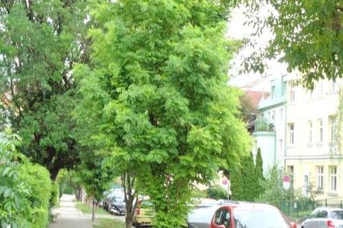 Gersthof/ Dachgeschosswohnung/ Balkon/ Terrasse mit Fernblick!