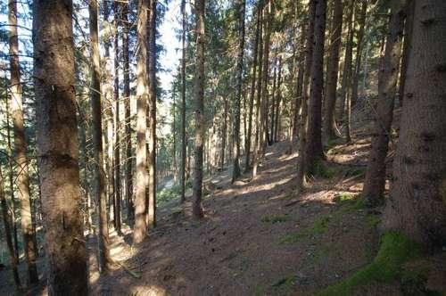 Waldparzelle im Gegendtal