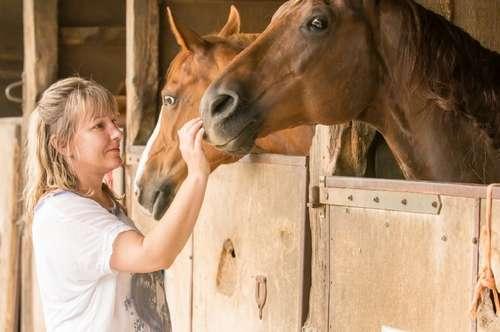 EIN PARADIES FÜR PFERDEFREUNDE mit 26 Pferdeboxen und großer Reithalle
