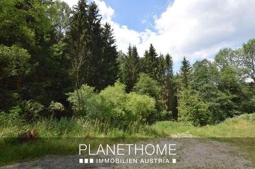 Wald ist Nachbar dieses Grundstücks in Pürnstein